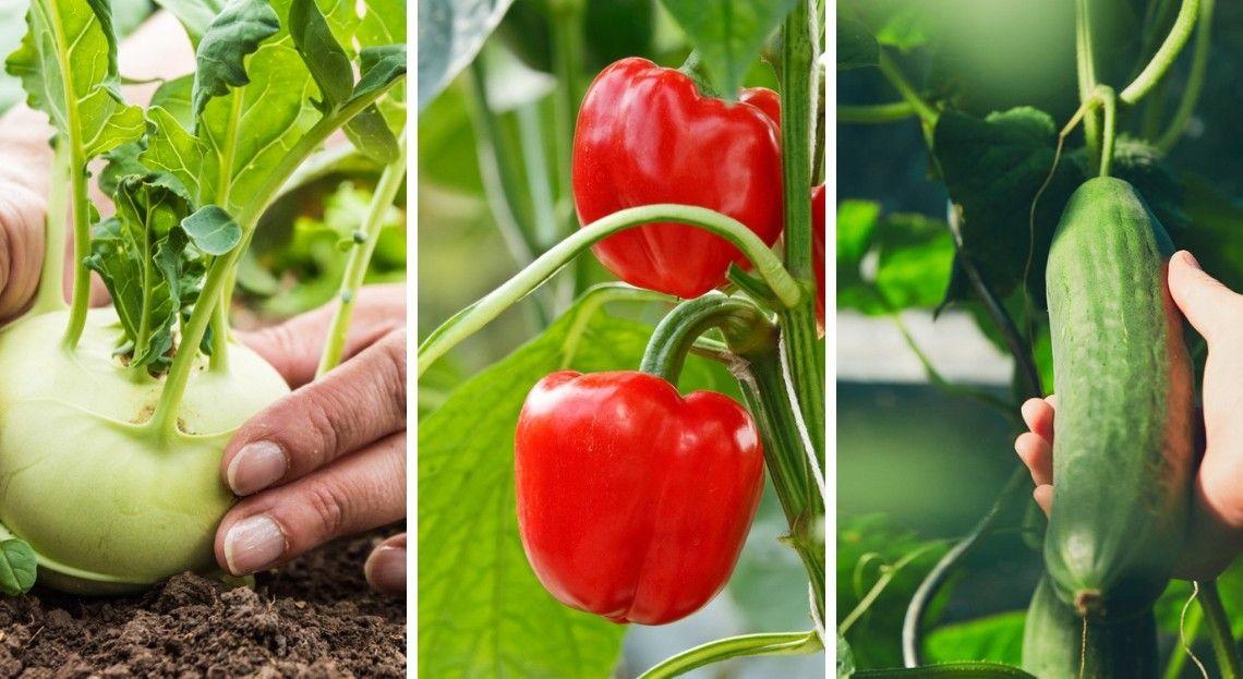 Potager 14 légumes à cultiver sous serre Potager