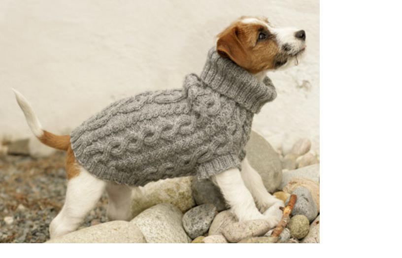 Mantita para perro a dos agujas | Animales y mascotas | Pinterest ...