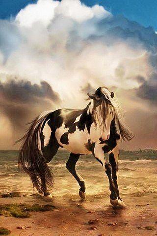 Pin By Martha Streinesbeger On Horses Horse Wallpaper Horses Free Horses