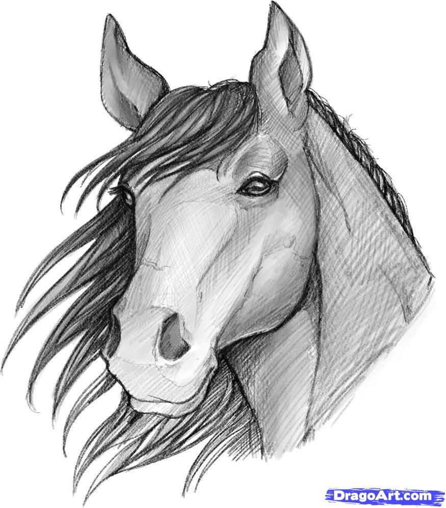 Image Of A Sketched Anime  How To Sketch A Horse