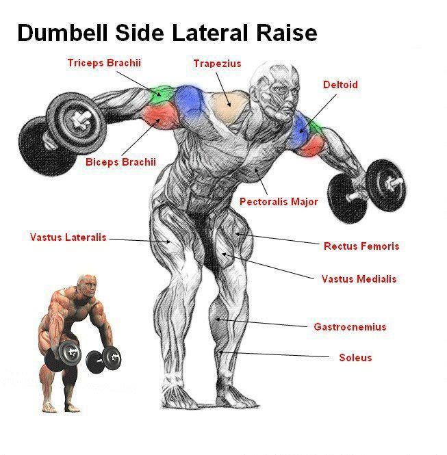 DUMBELL SIDE LATERAL RAISE ANATOMY | Do work | Pinterest ...