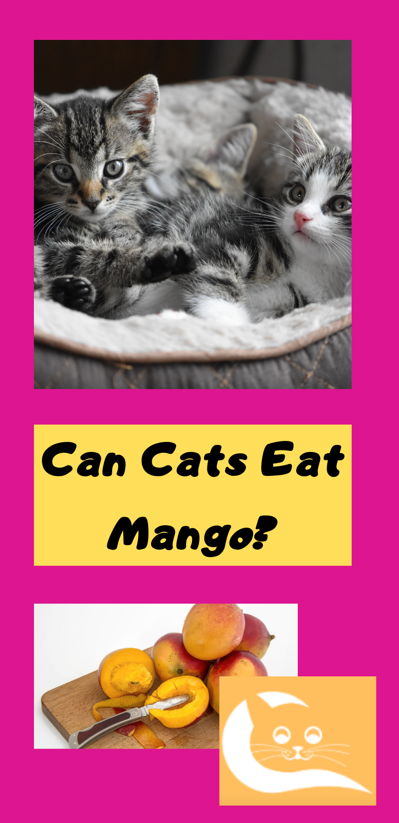 Can Cats Eat Mango Best cat food, Cats, Fancy salads