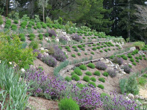 Sustainable Planting On Hillside Plants Mulch And Terraces Slow Water Movement Sustainable Garden Drought Tolerant Landscape Design Permaculture