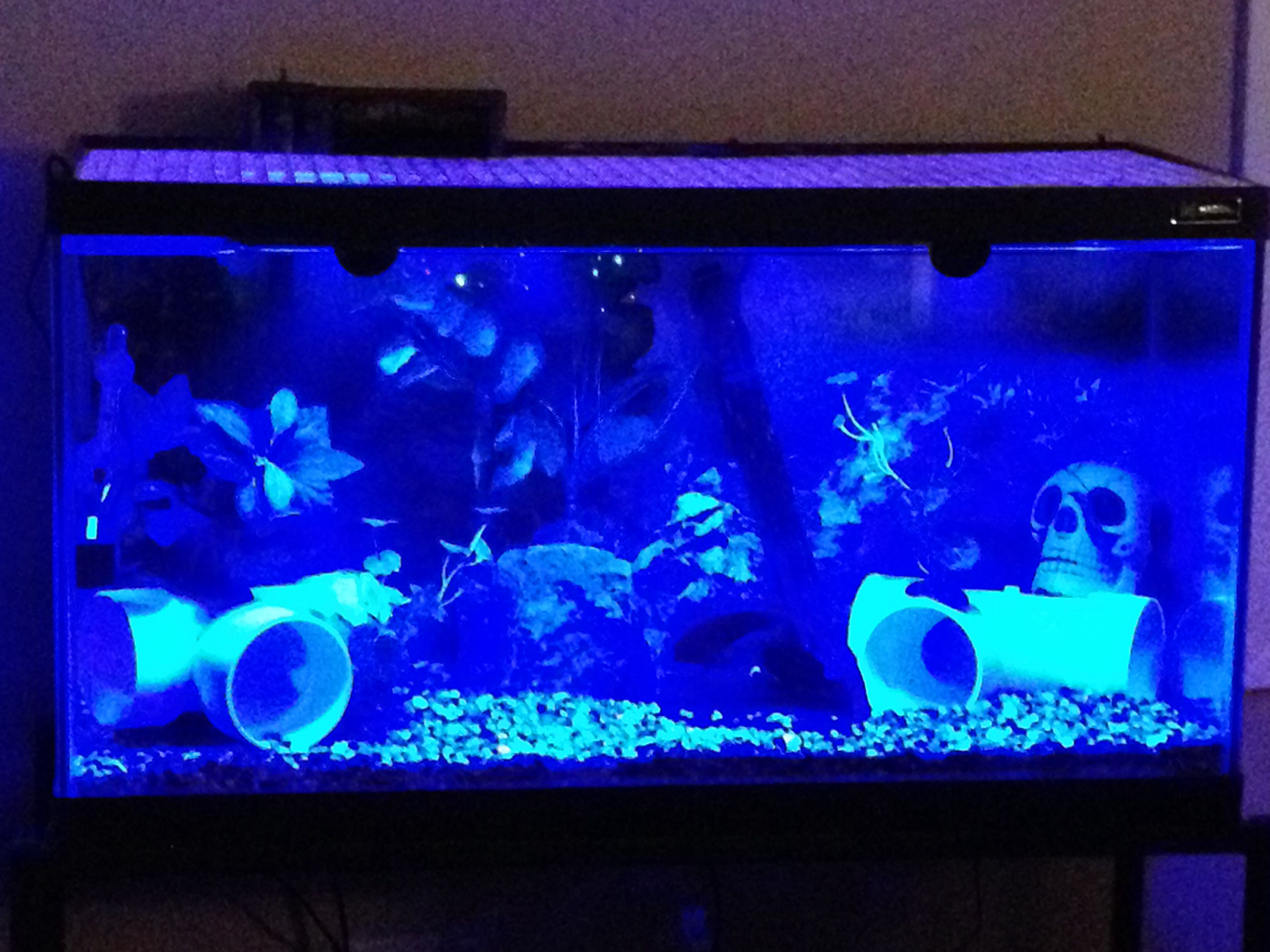 Fish tank night light - Aurora Cichlid Tank Breeding Quad Night Light