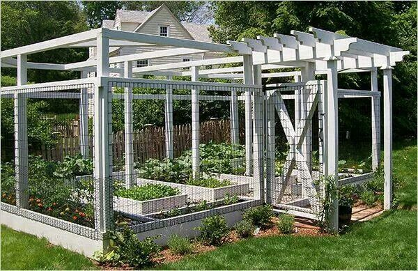 Protected Garden With Images Fenced Vegetable Garden Garden