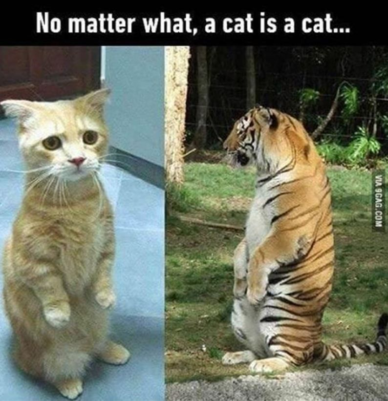 Funny Animals Of The Day #cuteanimalhumor
