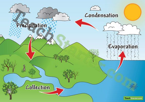Water Cycle Poster | Teach Starter - Teaching Resources | School ...