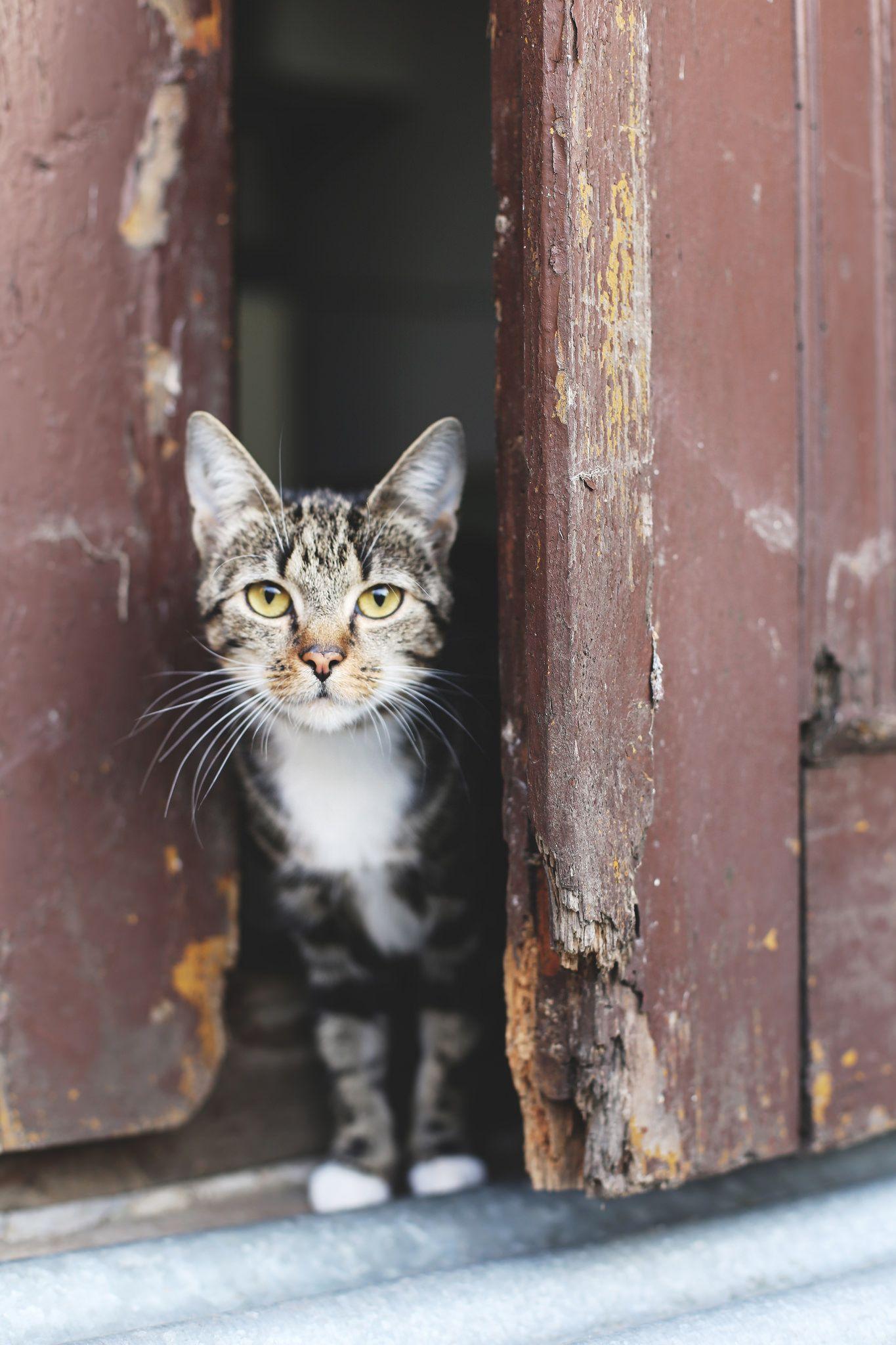 Ryszarda Ryśka Cats, Cool cats, Man, dog