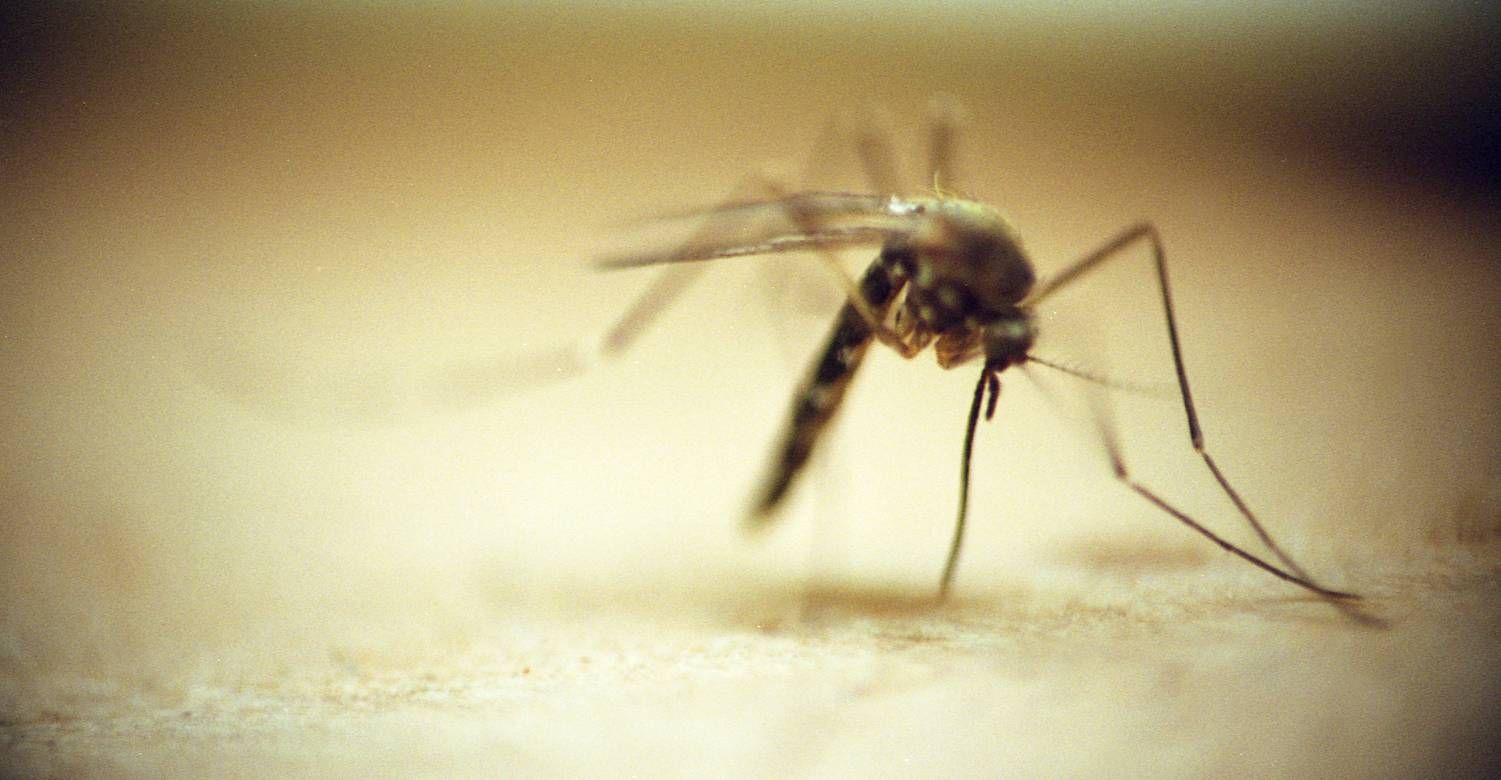 Mosquito season is upon us. Good luck avoiding pesky bites if you drink beer, exercise or have Type O blood.