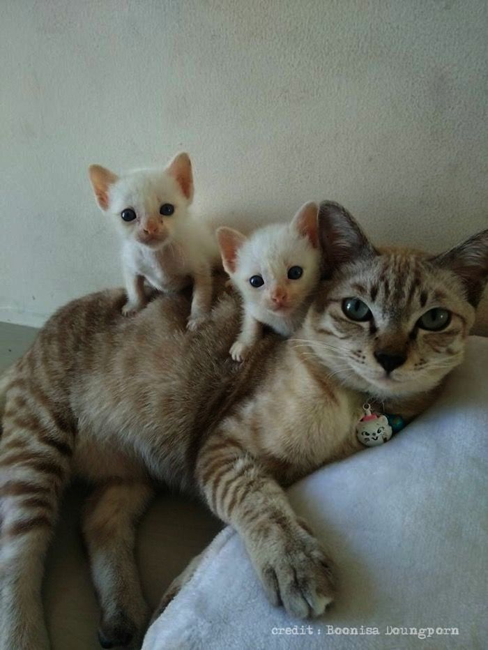 Cute Cats Hd Wallpaper Download Cute Kittens Cuddling
