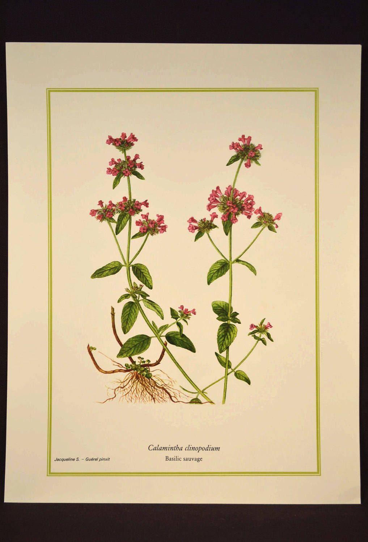 Wild Basil Print Flower Wall Decor Nature Botanical Art | Nature ...