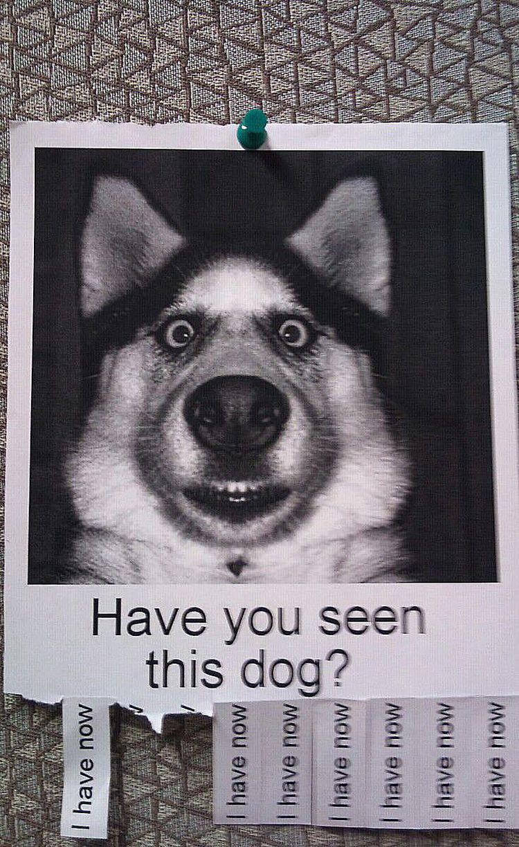 20 Funny Lost And Found Pet Posters Funny Losing A Dog Find