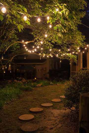 Hang Clear Patio Lights Between Trees For Outdoor Party Lighting.