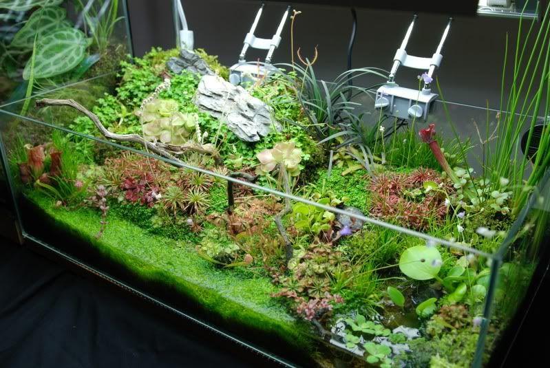 nano aquarium with carnivorous plants paludarium plante carnivore terrarium jardins. Black Bedroom Furniture Sets. Home Design Ideas