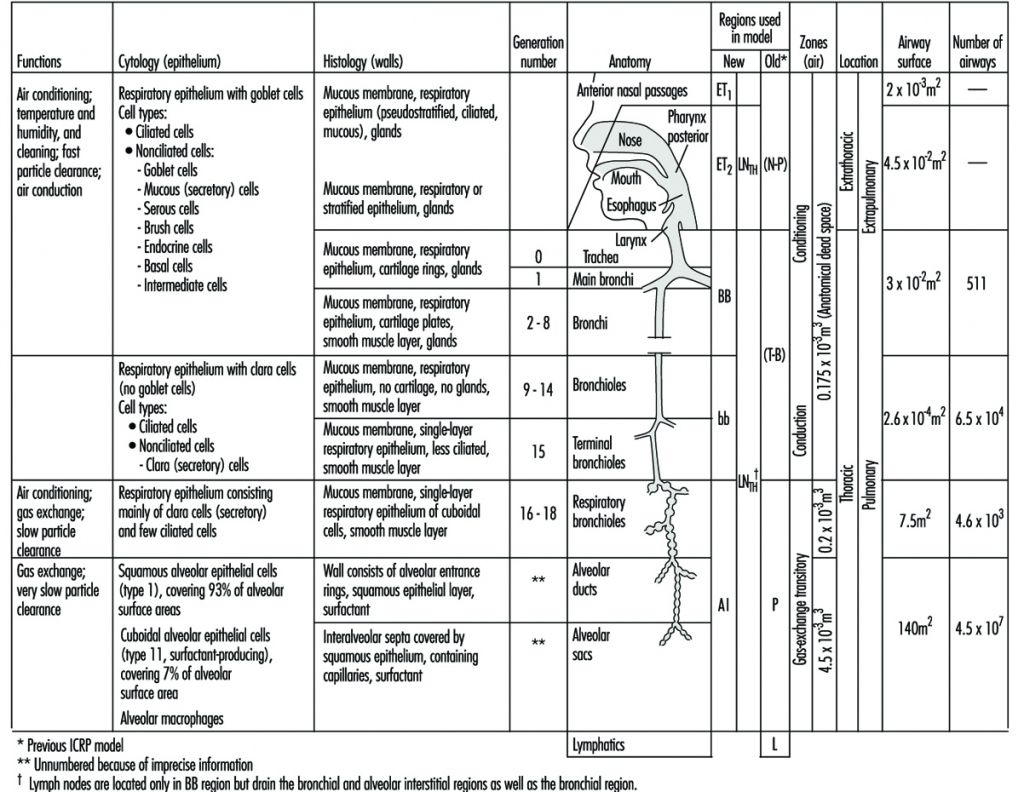 Parts And Functions Respiratory System Function Anatomy