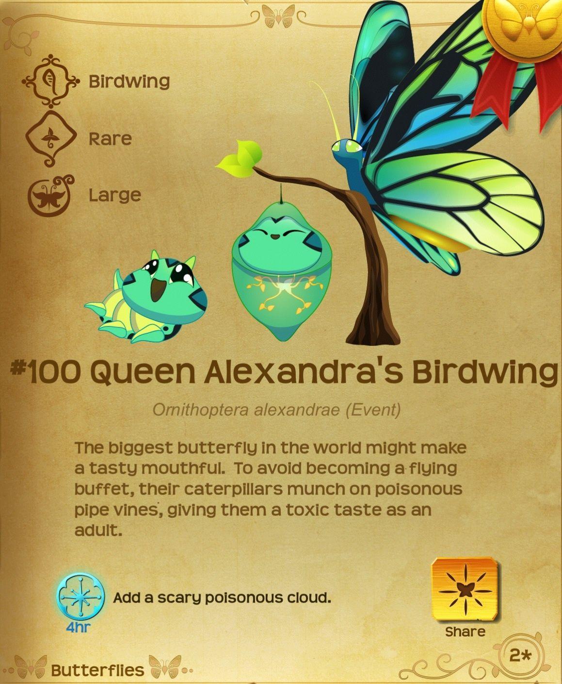 ผลการค้นหารูปภาพสำหรับ Flutter Butterfly Sanctuary