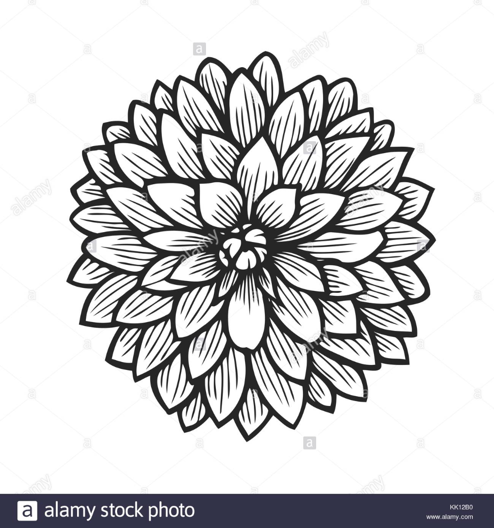 Outline Dahlia Flower Drawing Google Search In 2020 Flower Drawing Flower Coloring Pages Dahlia Flower