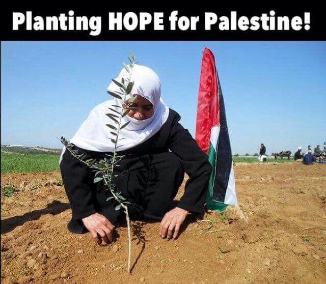 #FreePalestine #BoycottIsrael #Resistance #Resilience