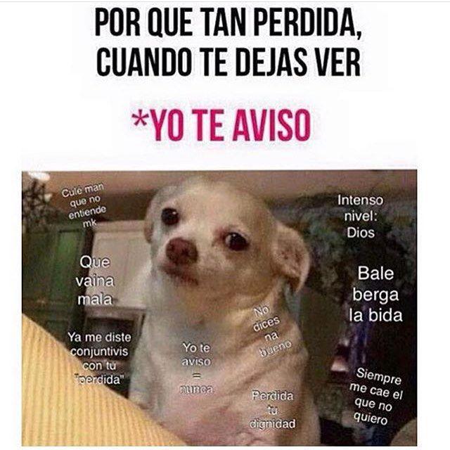 Mister Chiste On Instagram Jajajaja Perro Enojado Enojo Frases De Risa