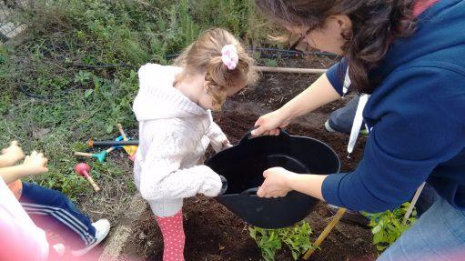 Plantando guisantes