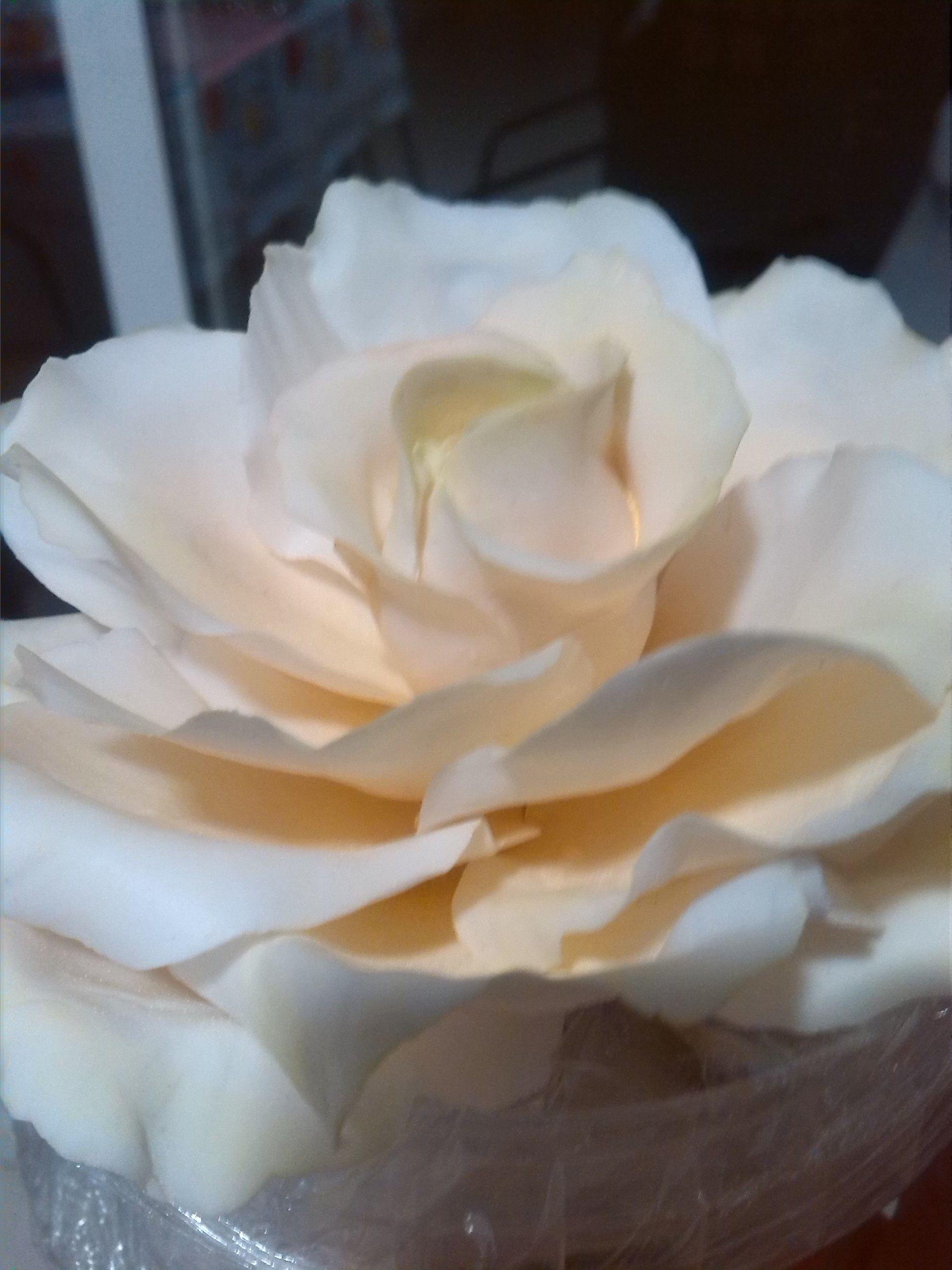 yellow sugar rose