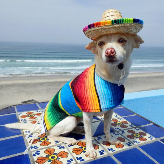 Dog Clothes Handmade Dog Apparel From Authentic Mexican Blanket
