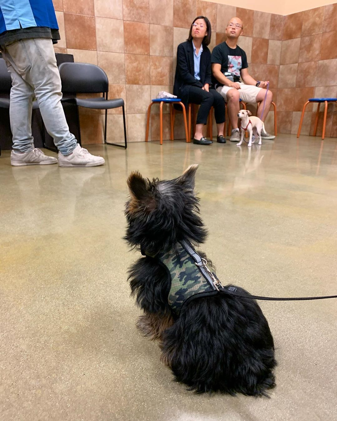 My Hoomans Enrolled Me In Puppy Training Classes Petsmart And I