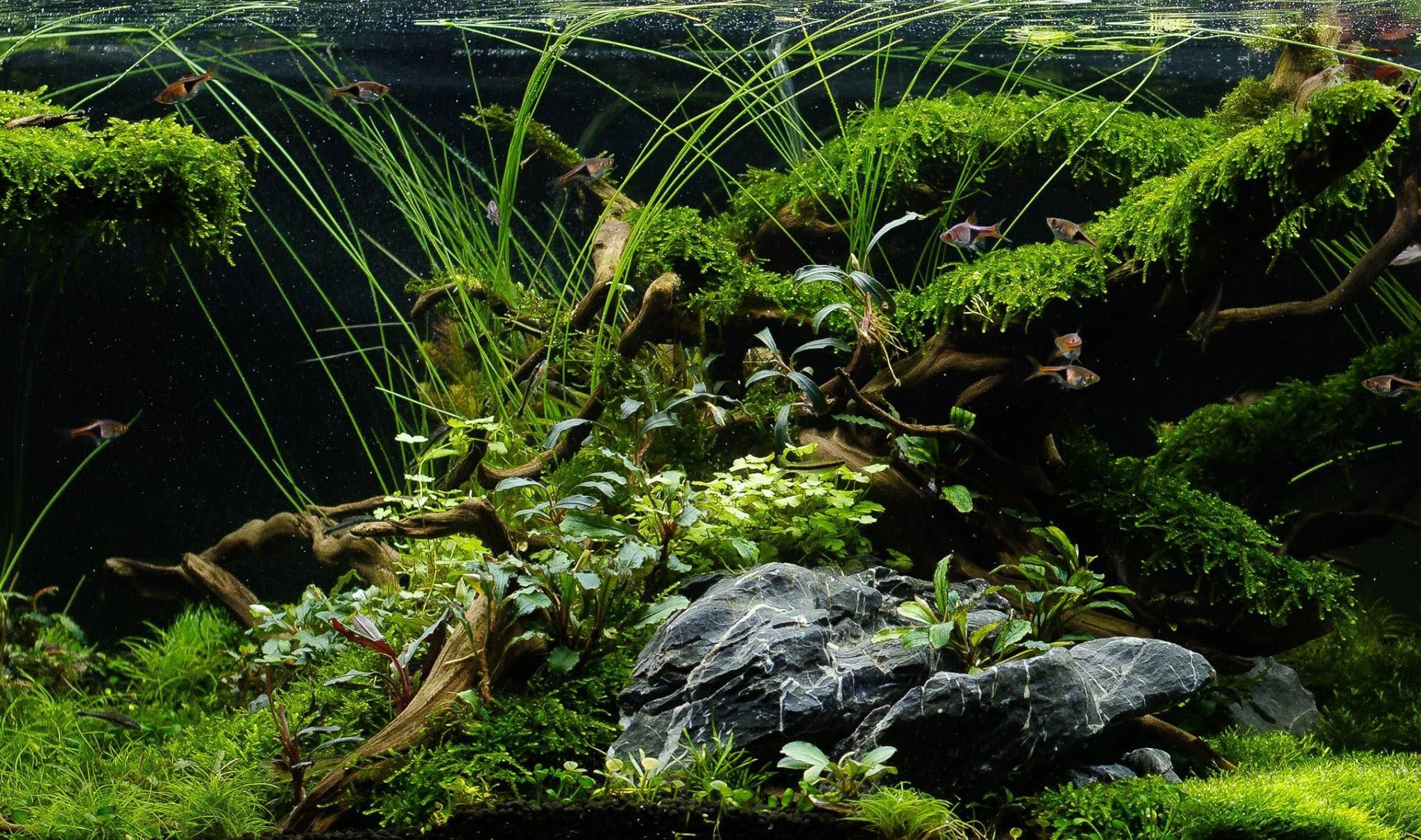 Aquascaping The World