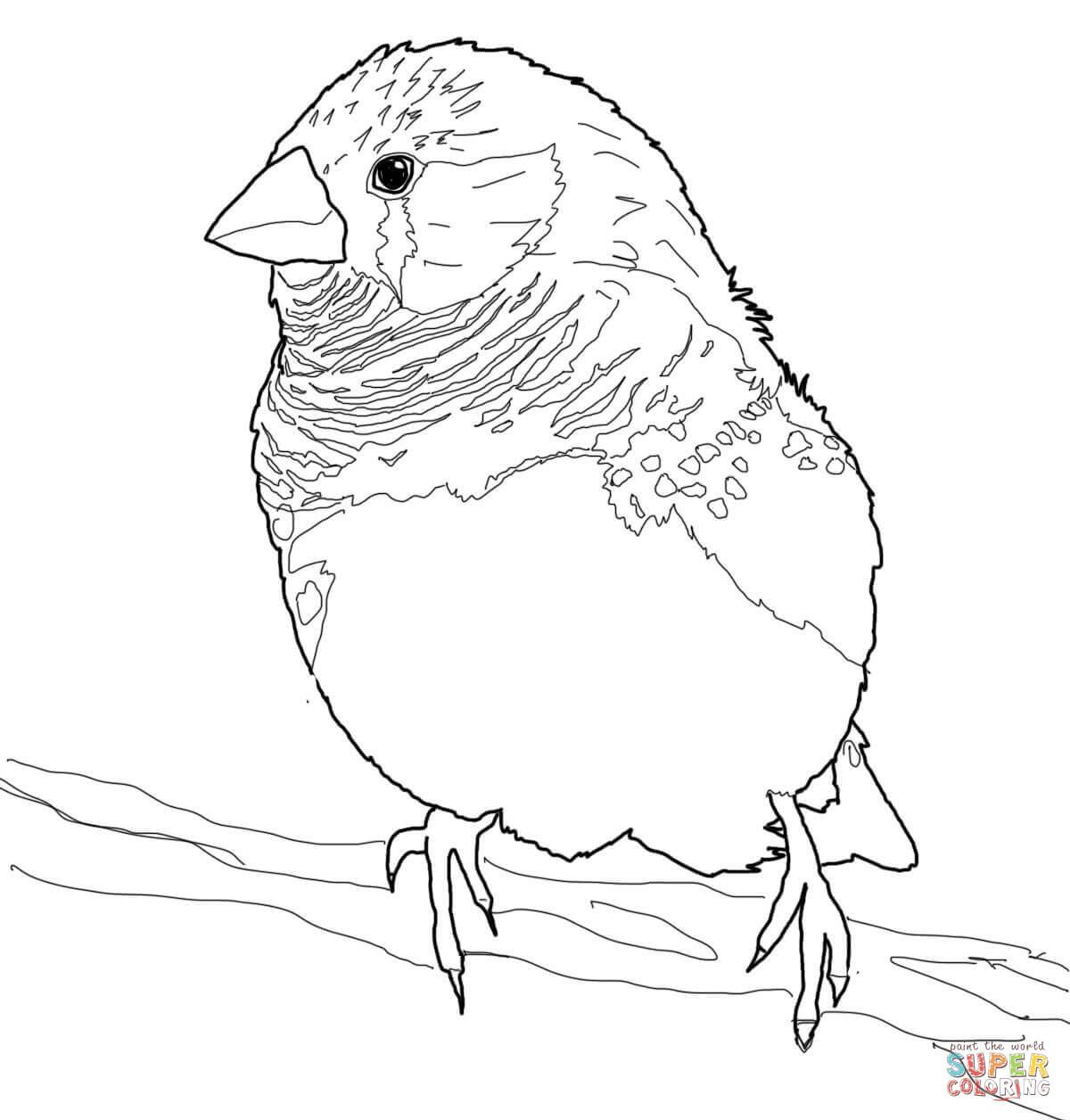 Resultado de imagen para izurieta dibujos de pájaros | aves ...