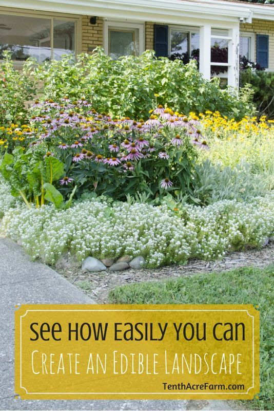 See How Easily You Can Create An Edible Landscape 640 x 480