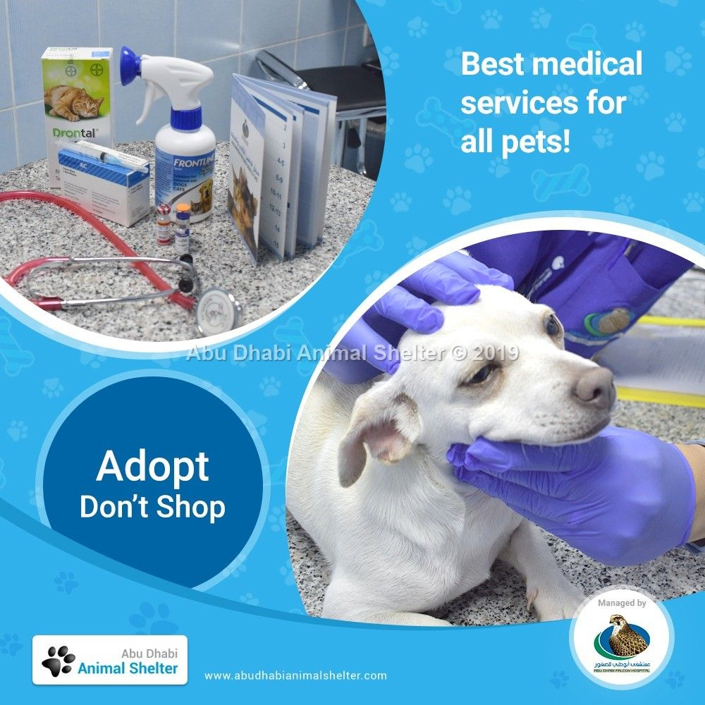 All Pets At Adas Are Given The Best Quality Medical Care To Prepare Them For Their New And Forever Homes Adas Animalshelter Animal Shelter Dog List Animals