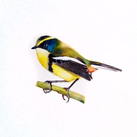 Aves del sur. acuarela sobre papel Arches, tamaño escala, formato 45 x 45 cm