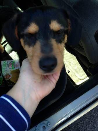 DOG FOUND small mixed breed (Waterbury, CT) Medium size