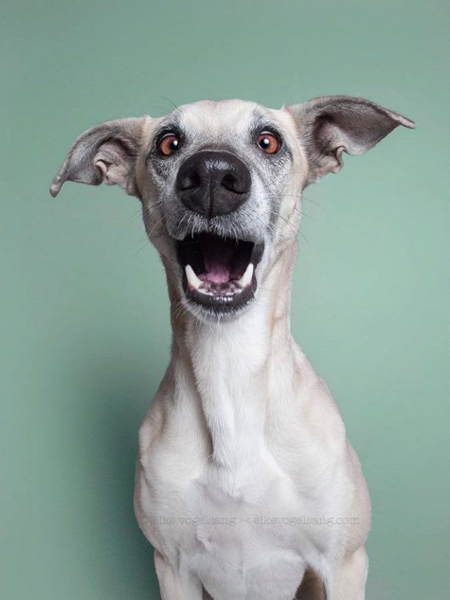 If you love dogs, you gonna love those solo funny and expressive portraits of dogs captured by Elke Vogelsang. l #photography #dogs #portraits #lol