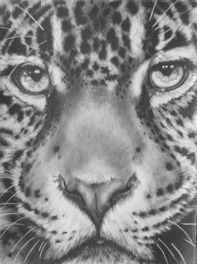 up close jaguar drawing by barbara keith