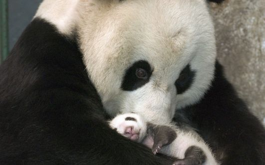 Mamas love  xoxo