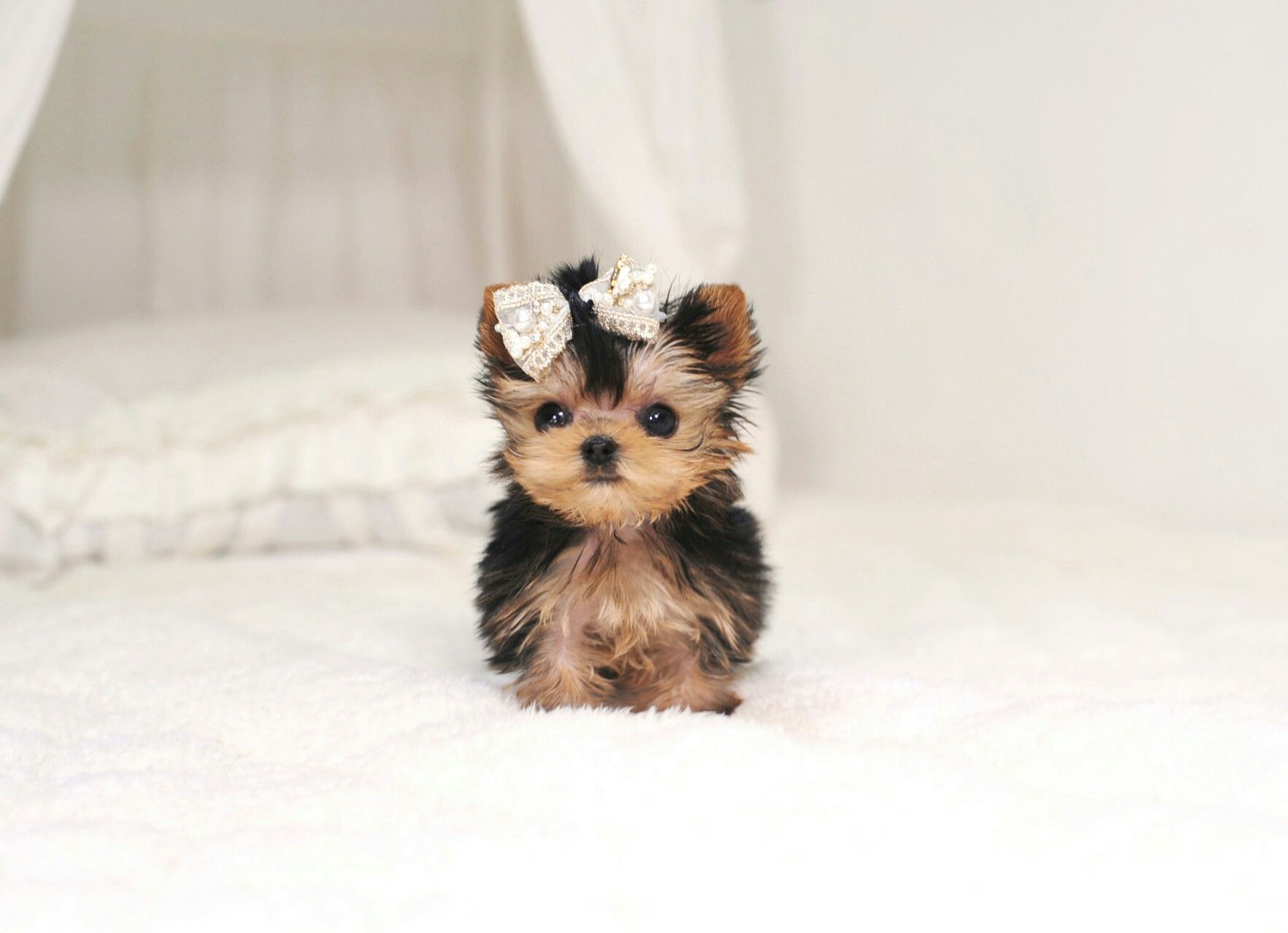 Coisa Linda Cute Baby Dogs Cute Puppies Cute Dogs