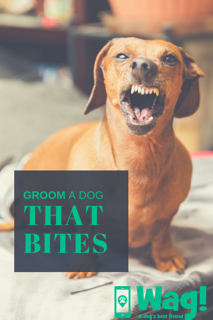 How To Groom A Dog That Bites Dog Grooming Pinterest