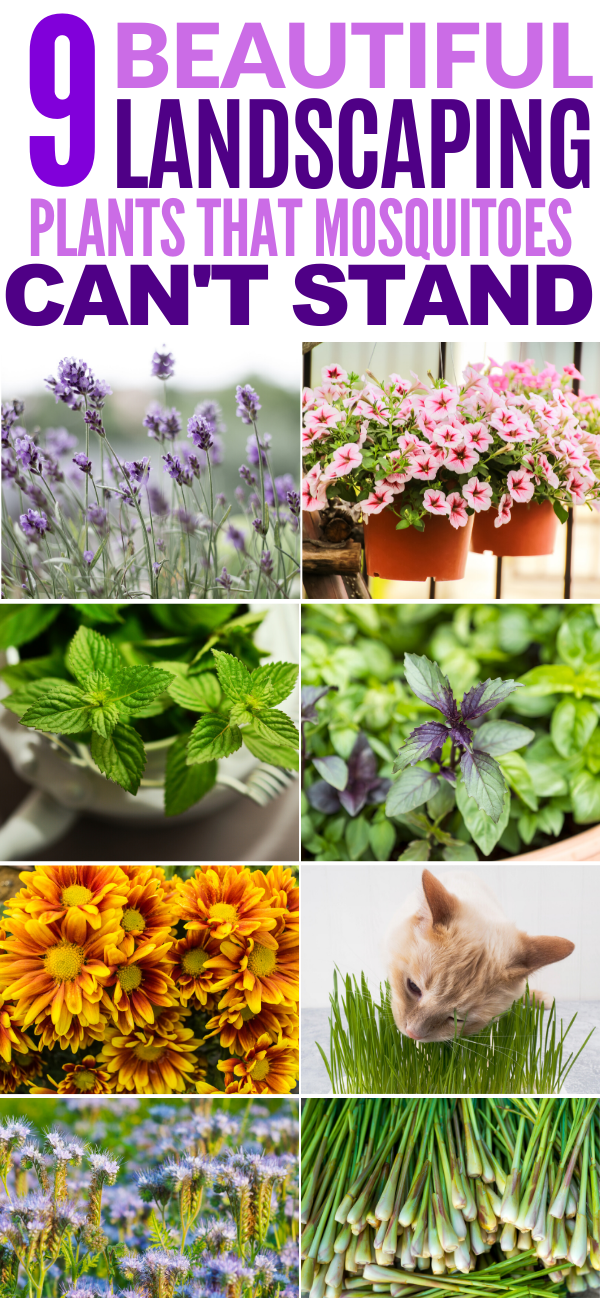 9 Mosquito Repelling Plants to Landscape With