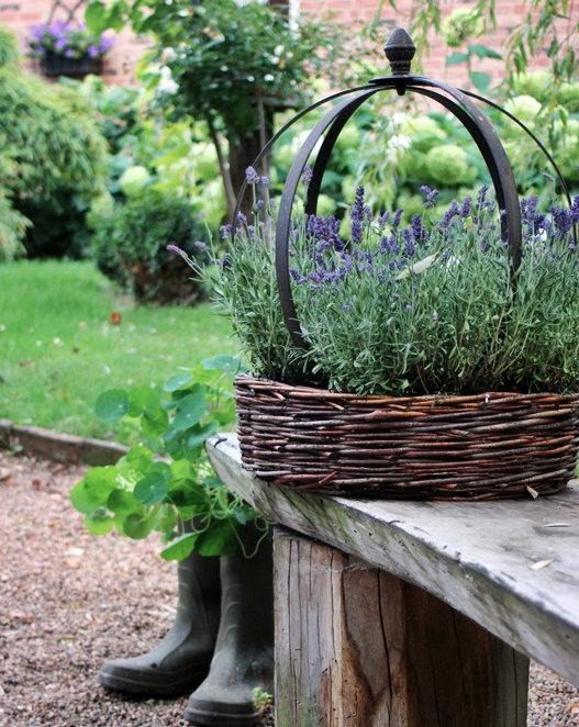 Lavender in s basket