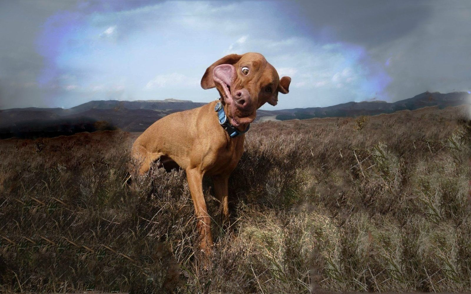 Awesome Photos Daily Awesome Videos Awesome Gifs Funny Dog Pictures Dog Background Cool Pets