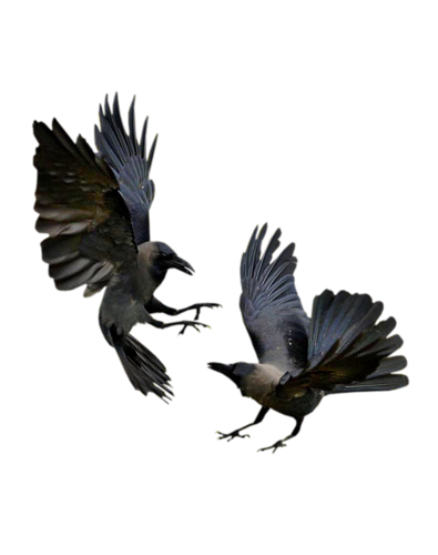 corbeaux corbeau tatouage en 2018 pinterest corbeau tatouage corbeau et oiseaux. Black Bedroom Furniture Sets. Home Design Ideas