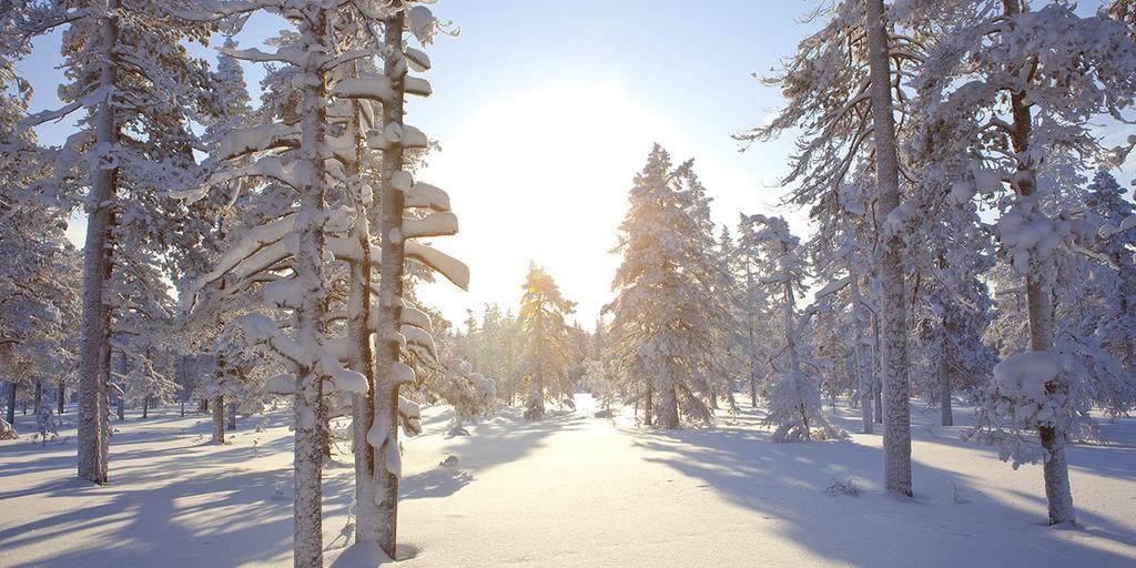 Vielä löytyy Suomesta puhdasta luontoa. Mukavia hiihtomaastoja riittää!