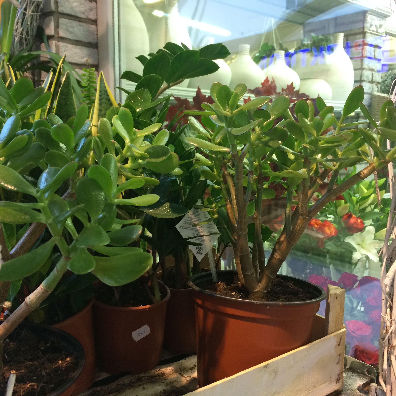 Kwiaty W Lazience Tej Z Oknem Tez Plants