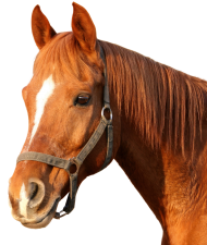 Download Horse Png Images Background Png Free Png Images Horse Background Horses Horse Head