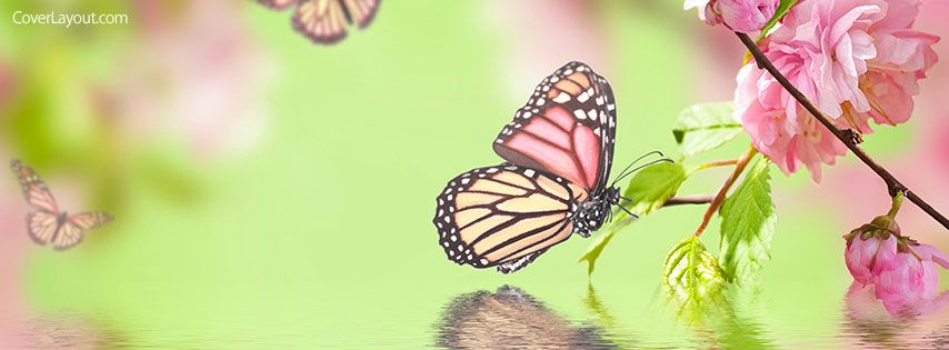 Spring Accommodation Facebook Covers: Butterfly Spring Facebook Cover Coverlayout.com