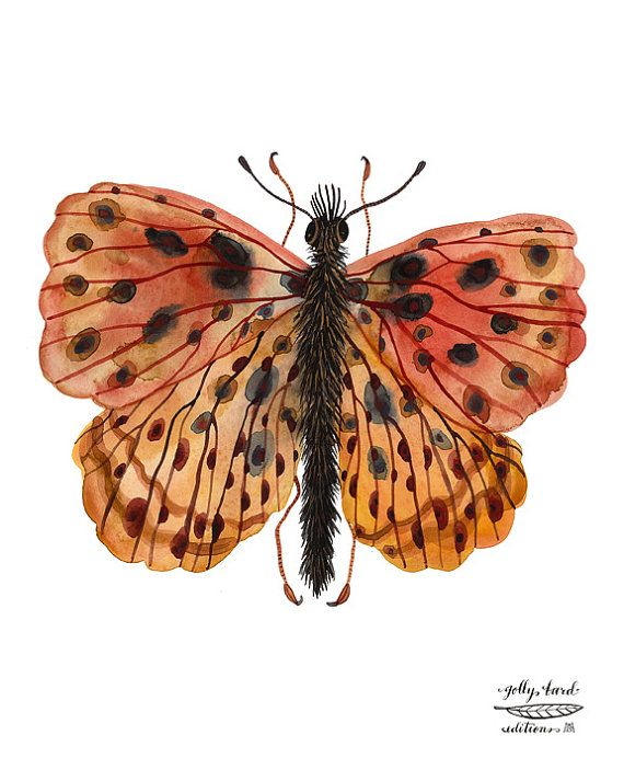 weavers+fritillary+butterfly+specimen+giclee+print+by+by+GollyBard,+$36.00