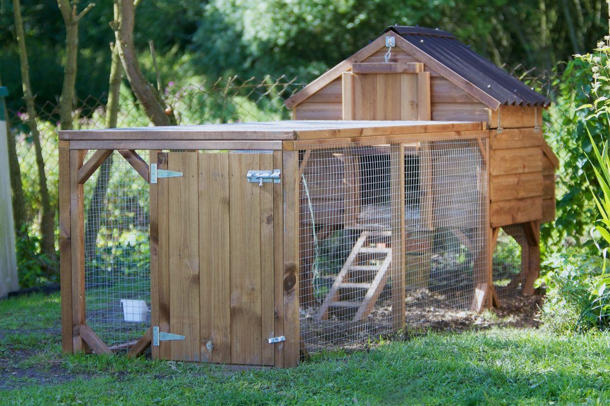 Tendance Amenager Son Poulailler Poulets De Basse Cour Poulailler Plan Pour Construire Poulailler