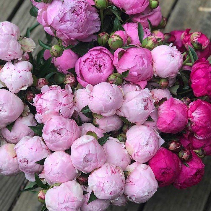 Fake Flowervines Bobbydaleearnhardt.com
