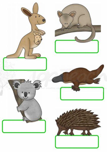 Australian animal name tags | Top Teacher - Innovative and creative early childhood curriculum resources for your classroom